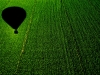 Balloon shadow on the cornfield
