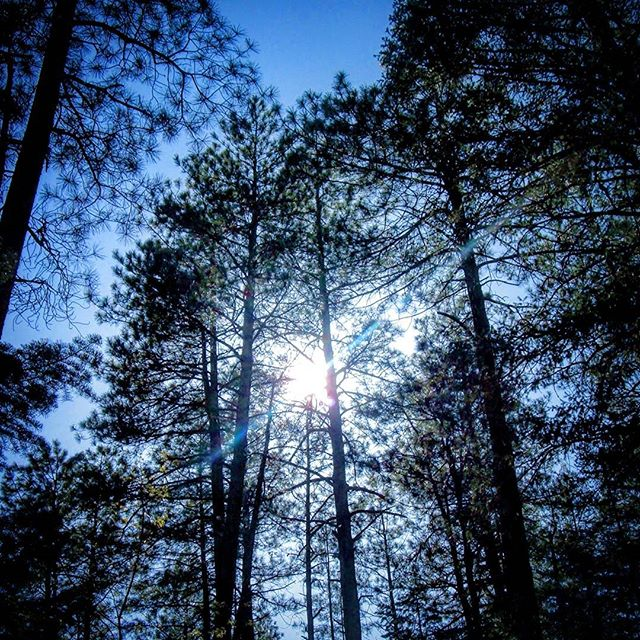 Somewhere by Hortons Creek in Payson, AZ. #hortonscreek #hortonscreektrail #az #photography #photographer #amateurphotographer #amateurphotographer #naturephotography #nature #sun #sunrays #forest