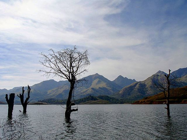 Dead trees in the water.  #pookodelake #travel #photography #photographer #amateurphotography #amateurphotographer #travelphotography #naturephotography #nature #scenery #landscape #landscapes #landscapephotography #lakes #lake #incredibleindia #kerala #godsowncountry