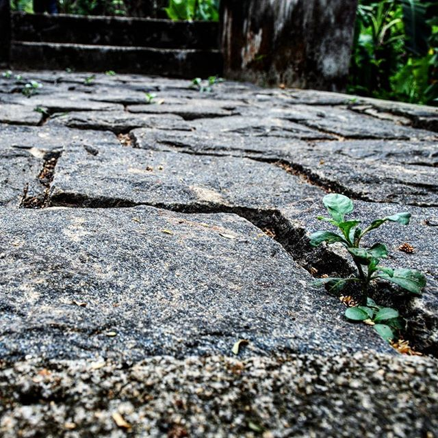 Life uh... finds a way... Granite floor of the Vaipikkotta Portuguese Seminary ruins in Chendamangalam. The seminary was destroyed by Tipu Sultan.  #incredibleindia #india #kerala #chendamangalam #vaipikkottaseminary #kottayilkovilakam #nikon #nikond3000 #nikonphotography #amateurphotography #amateurphotographer #photography #photographer #ruins #archaeology #history