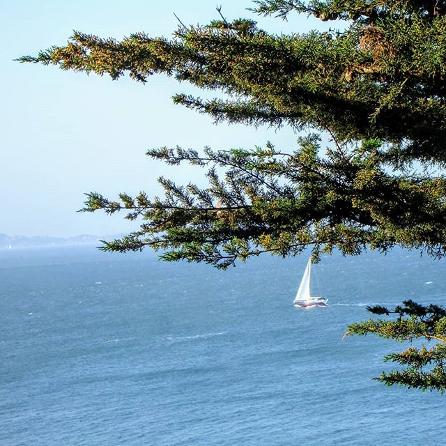 Sailboat through the trees.  #sailboat #sanfranciscobay #sailing #boating #sf #sanfrancisco #bayarea #boats #boating #sailboats #photography #photographer #amateurphotography #amateurphotographer #sceneryphotography #scenery #ocean #blue