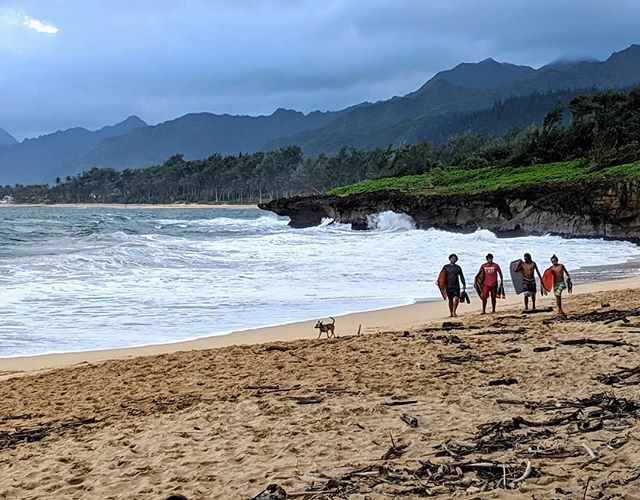 Dog with surfer buddies at Pounders Beach.  #hawaii #poundersbeach #vacation #beach #surfer #doggo #amateurphotographer #amateurphotography #photographer #photography #mobilephotographer #mobilephotography